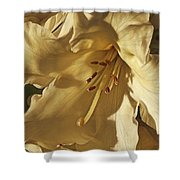 Yellow Rhododendron Shower Curtain