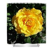 Yellow Rose #1 Shower Curtain