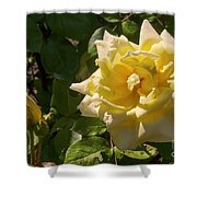 Yellow Rose And Bud Shower Curtain