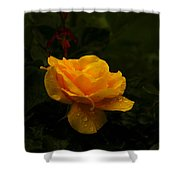 Yellow Rose Dapples With Waterdfrops Shower Curtain