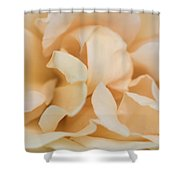 Yellow Rose - Featured 3 Shower Curtain