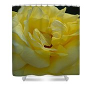 Yellow Rose Frills Shower Curtain