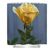 Yellow Rose Greeting Card Shower Curtain