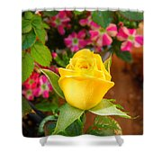 Yellow Rose In Bloom Shower Curtain