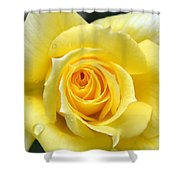 Yellow Rose L Shower Curtain