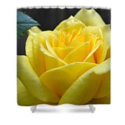 Yellow Rose Ll Shower Curtain
