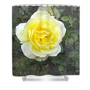 Yellow Rose Of Summer Shower Curtain