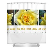 Yellow Rose On The First Day Of Summer Shower Curtain