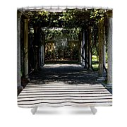Yellow Rose Pergola Shower Curtain