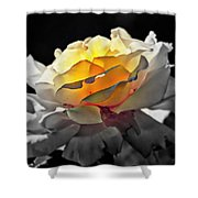 Yellow Rose Series - ...but Soul Is Alive Shower Curtain