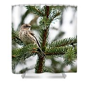 Yellow Rumped Evergreen Shower Curtain