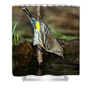 Yellow-rumped Warbler Drinking Shower Curtain