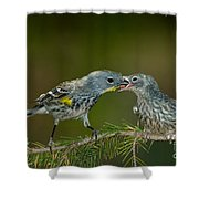 Yellow-rumped Warbler Feeding Young Shower Curtain
