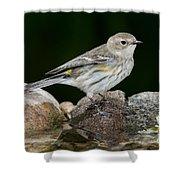 Yellow-rumped Warbler Hen Shower Curtain