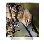 Yellow-rumped Warbler - Precious Shower Curtain