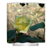 Yellow Satin Shower Curtain