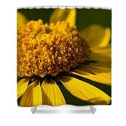 Yellow Saucer Shower Curtain