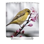 Western Tangier Shower Curtain