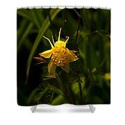 Yellow Splendor Shower Curtain