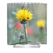 Yellow Star-thistle Shower Curtain