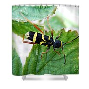 Yellow Stripped Beetle Shower Curtain
