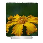 Yellow Sun Burst...   # Shower Curtain