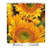 Yellow Sun Flower Burst Shower Curtain