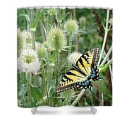 Yellow Swallowtail Butterfly Shower Curtain