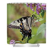 Yellow Swallowtail Butterfly Taking A Drink Shower Curtain