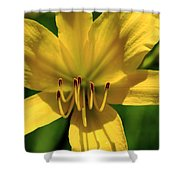 Yellow Too Lily Flower Art Shower Curtain