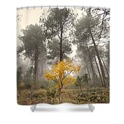 Yellow Tree In The Foggy Forest Shower Curtain