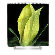 Yellow Trillium Shower Curtain
