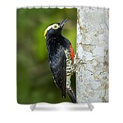 Yellow-tufted Woodpecker Shower Curtain