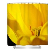 Yellow Tulip Closeup Shower Curtain