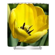 Yellow Tulip Cup Shower Curtain