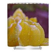 Yellow Tulip Dappled With Rain Shower Curtain