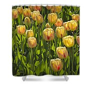 Yellow Tulip Flowers On Windmill Island In Holland Michigan Shower Curtain