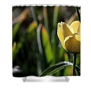Yellow Tulip With Dew Shower Curtain