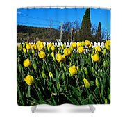 Yellow Tulips Before White Picket Fence Shower Curtain
