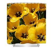 Golden Tulips In Full Bloom Shower Curtain