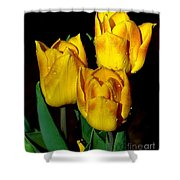 Yellow Tulips On Black Shower Curtain