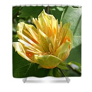 Yellow Tuliptree Flower Shower Curtain