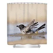 Yellow-vented Bulbul Shower Curtain