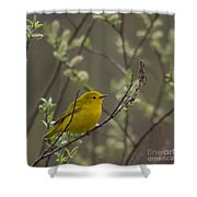 Yellow Warbler -1 Shower Curtain