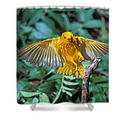 Yellow Warbler Dendroica Petechia Shower Curtain