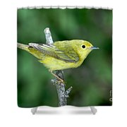 Yellow Warbler Dendroica Petechia Female Shower Curtain