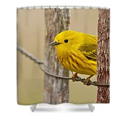 Yellow Warbler Pictures 90 Shower Curtain