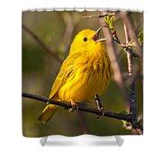 Yellow Warbler Singing Shower Curtain