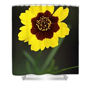 Yellow Wild Flower Shower Curtain