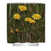 Yellow Wild Flowers Along The Chehalis Trail Shower Curtain